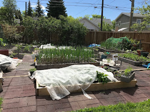 Organic with floating row covers