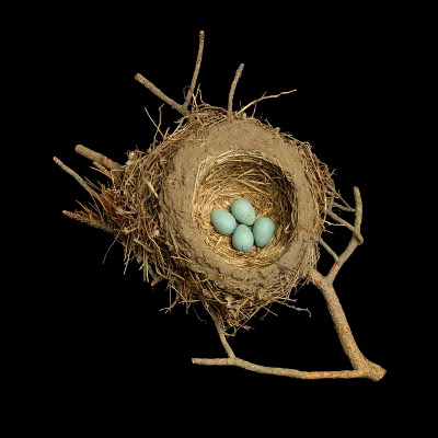 Birds nests pictures