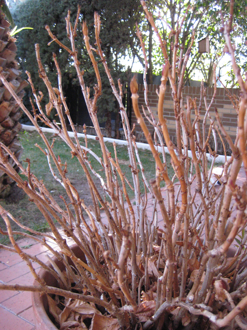 Marycot agenda de febrero - Como podar la hortensia ...