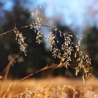 Estudo espiritual do tempo quaresmal - Parte 1