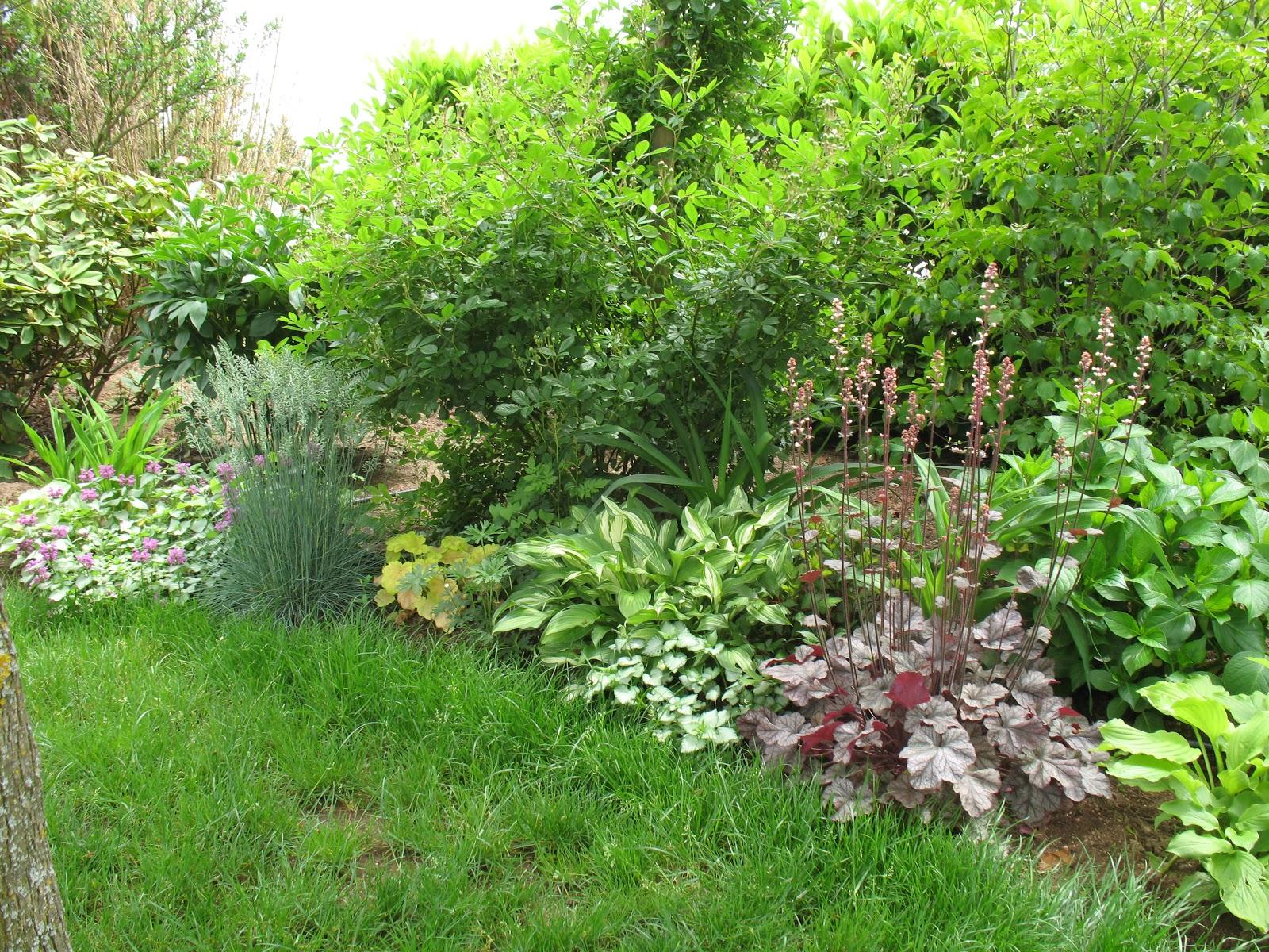 Roses du jardin ch neland hosta undulata vari gata for Catalogue de plantes vivaces