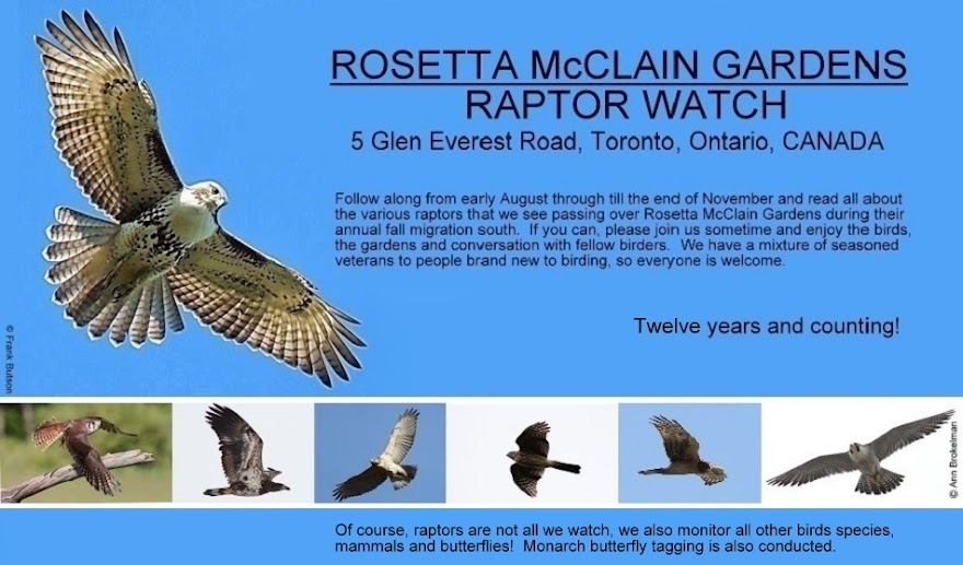 Rosetta McClain Gardens Raptor Watch