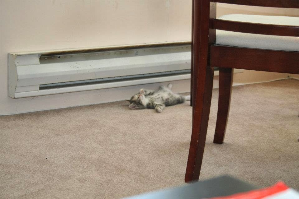 Funny cats - part 94 (40 pics + 10 gifs), cat pictures, kitten sleeps under the heater