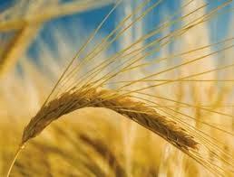 http://www.reuters.com/article/2014/09/26/usa-monsanto-wheat-idUSL2N0RR1OS20140926