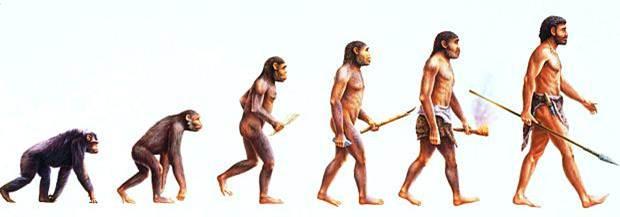 Resultado de imagem para O homem veio do macaco?