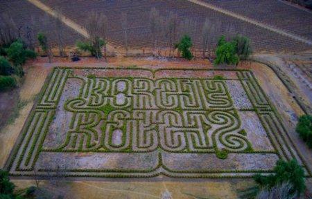 Oye borges borges ya tiene su laberinto en el municipio for Espejo 70 mendoza
