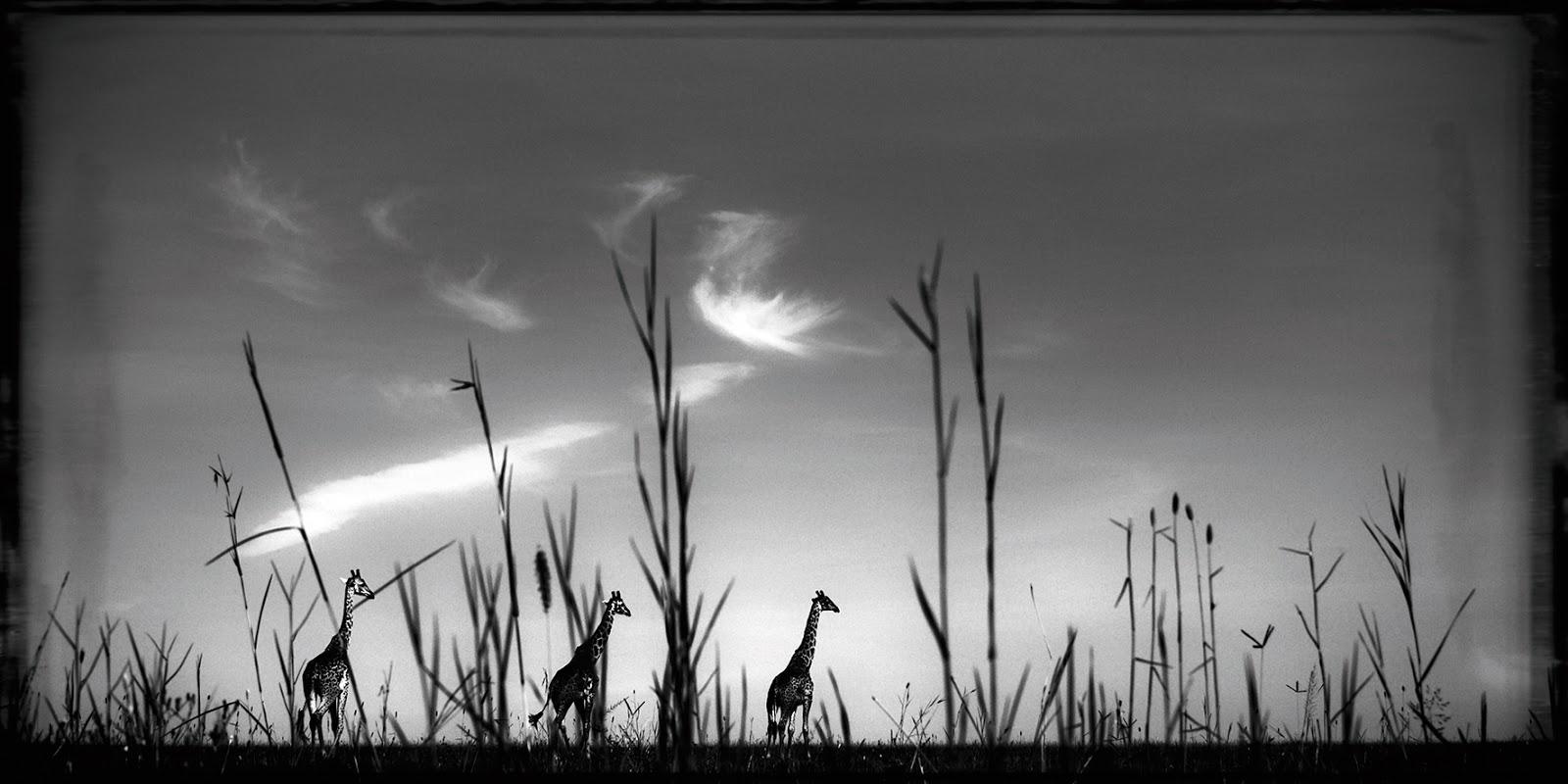 ... ' Diary: RENCONTRES PHOTOGRAPHIQUES CHEZ YELLOWKORNER...PAR HAYLEY