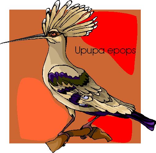 Upopa Epops Free Bird Clipart