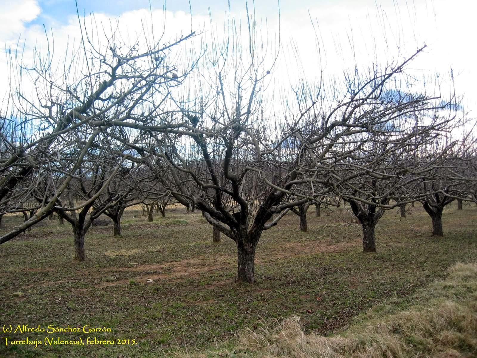 manzanos-esperiegos-torrebaja-valencia