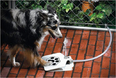 Dispositivo para que beban las mascotas