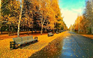 Sueño dorado otoño