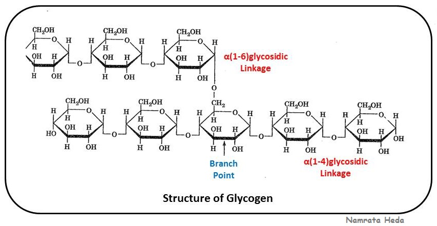 ) and glycogen. One of them is that of branching. In glycogen ...