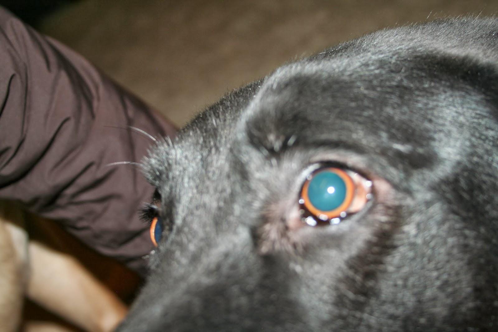 DSLR, Dog,