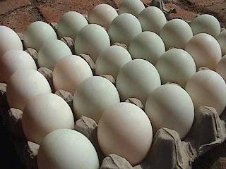 Manfaat Telur Itik