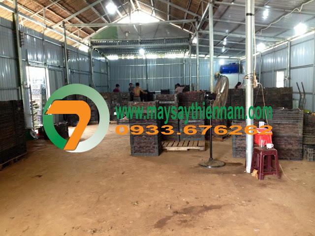 Xưởng sản xuất khoai lang khô xuất khẩu