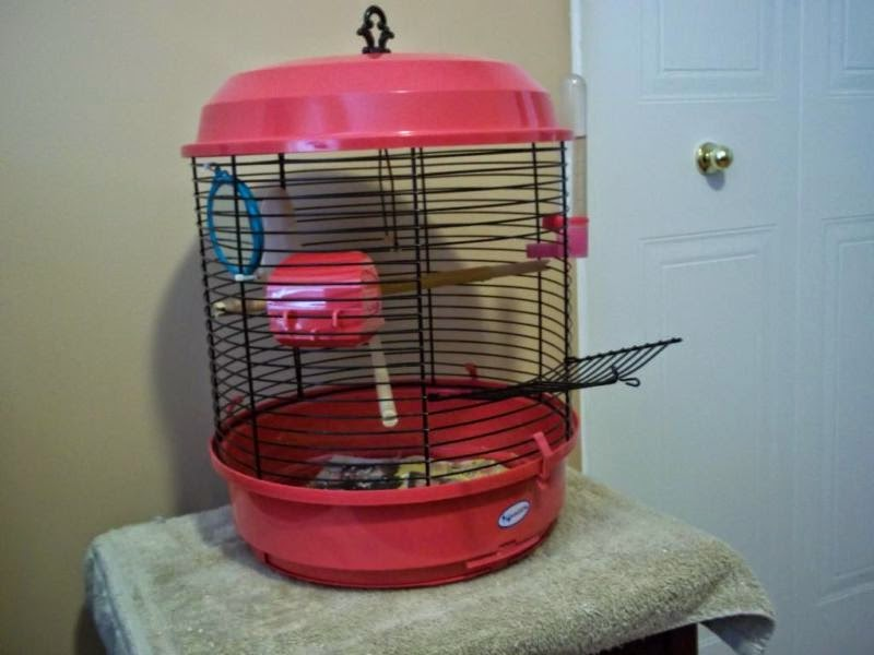 pet birds veterinary assisting parrots cages pet birds. Black Bedroom Furniture Sets. Home Design Ideas