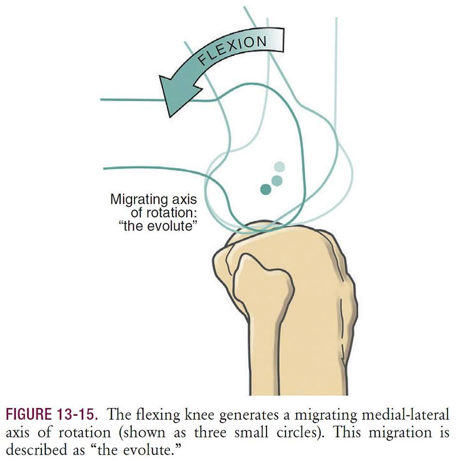 Вращение в суставах признаки дегенерации суставной губы