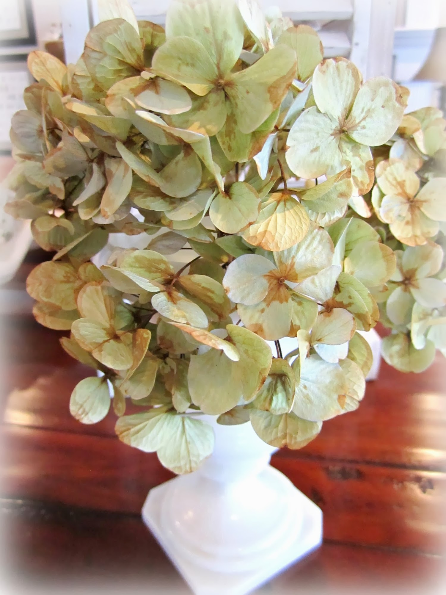 dried hydrangeas in a vase