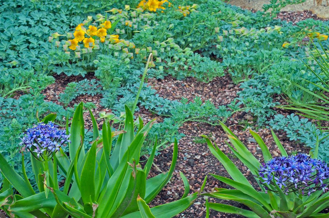 Linda cochran 39 s garden planting scheme with tropaeolum for Planting schemes for small gardens