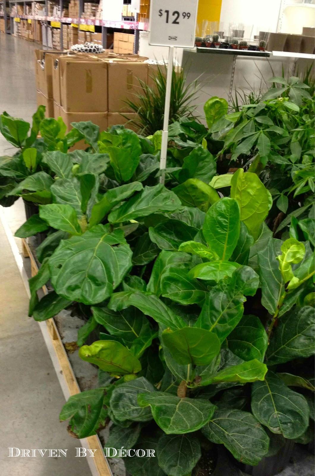 ikea's new indoor plants | drivendecor