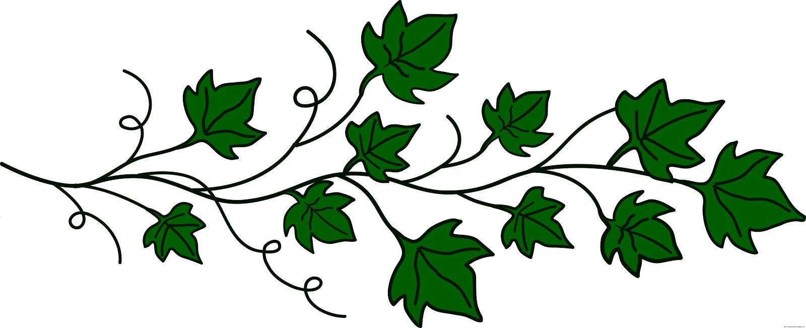 Ivy Leaf Vine Clip Art