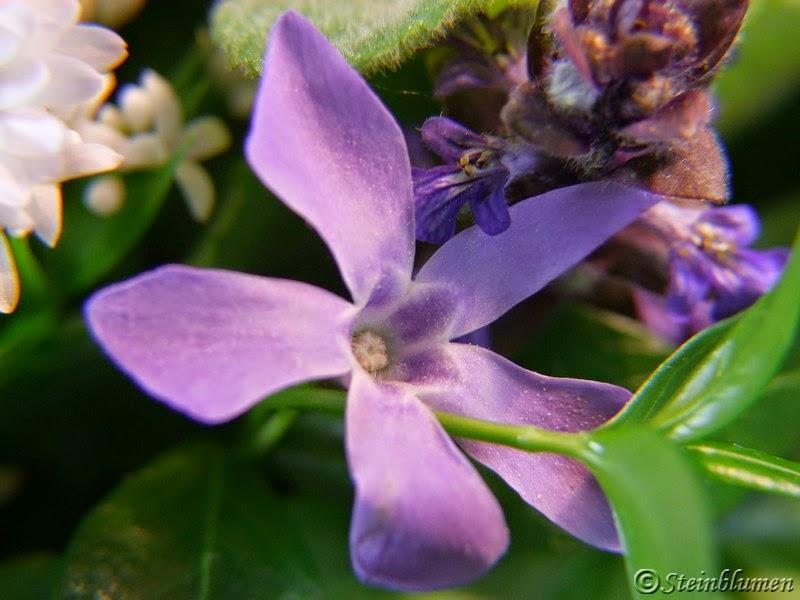 Vinca Blüten im Gesteck