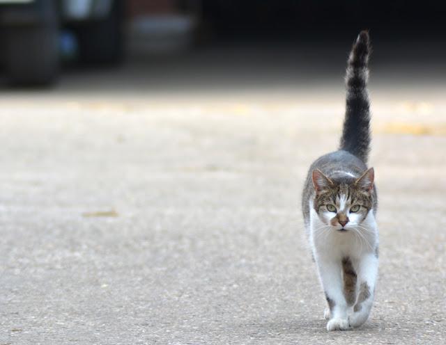 7 Sachen Sonmtags - Tierfotos für euch!