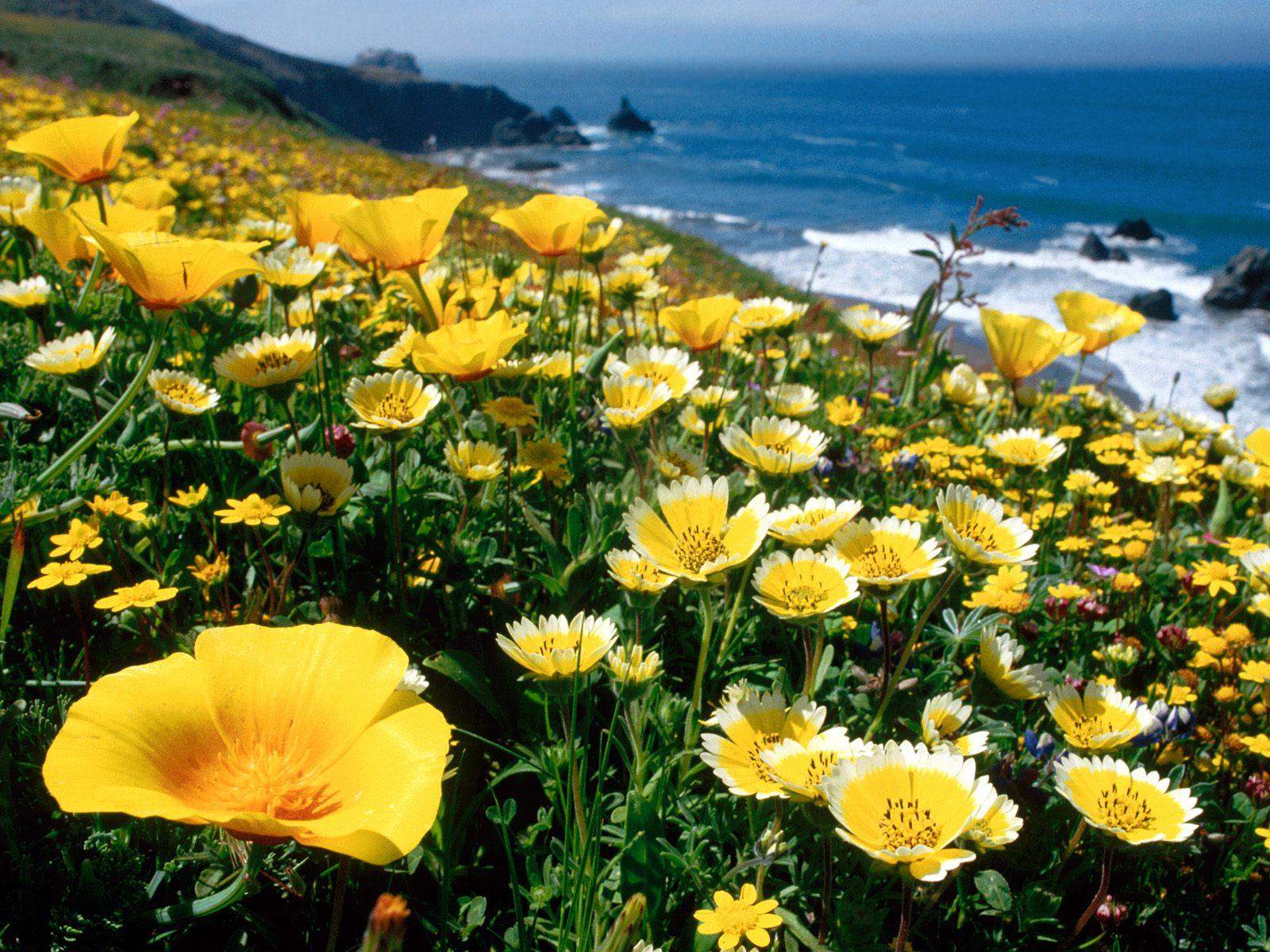 Cedar 39 s flower shop in edwards colorado july 2012 - Yellow poppy flower meaning ...