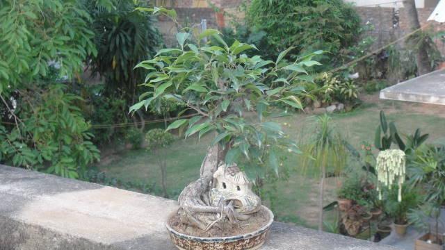 bonsai, styles