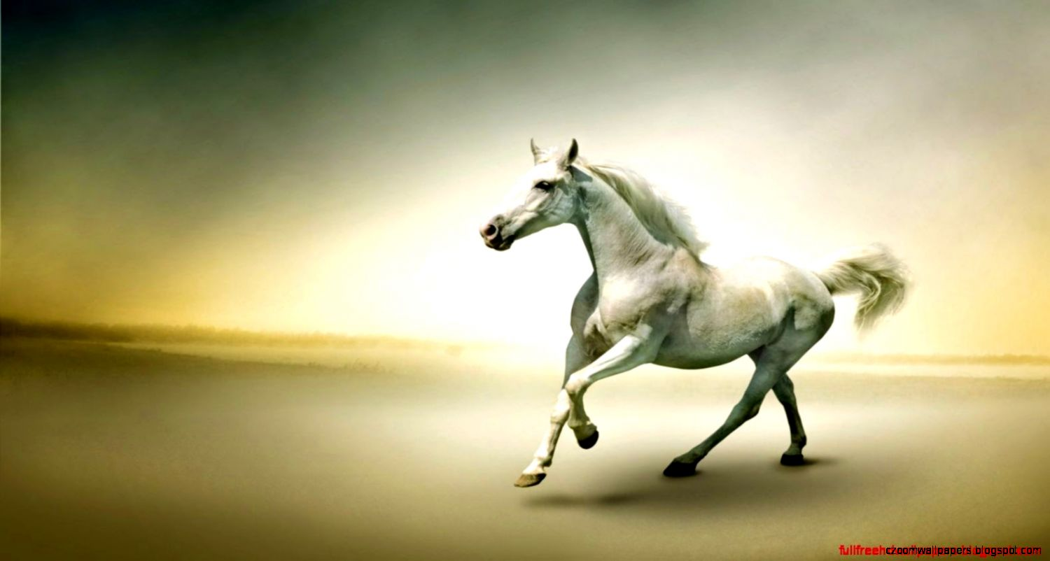 White Horse Hd Wallpaper  Full Free HD Wallpapers