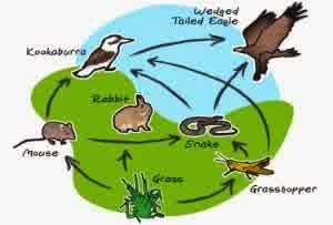 Ekosistem yaitu