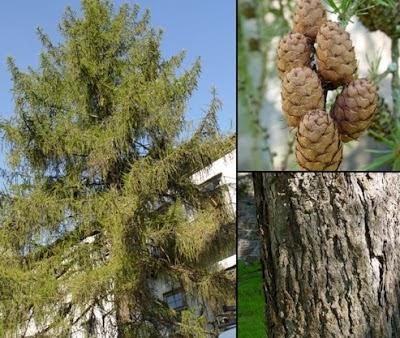 http://prirodno-ljekovito-bilje.blogspot.com/