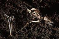 Restos de habitantes endemicos de las minas antiguas