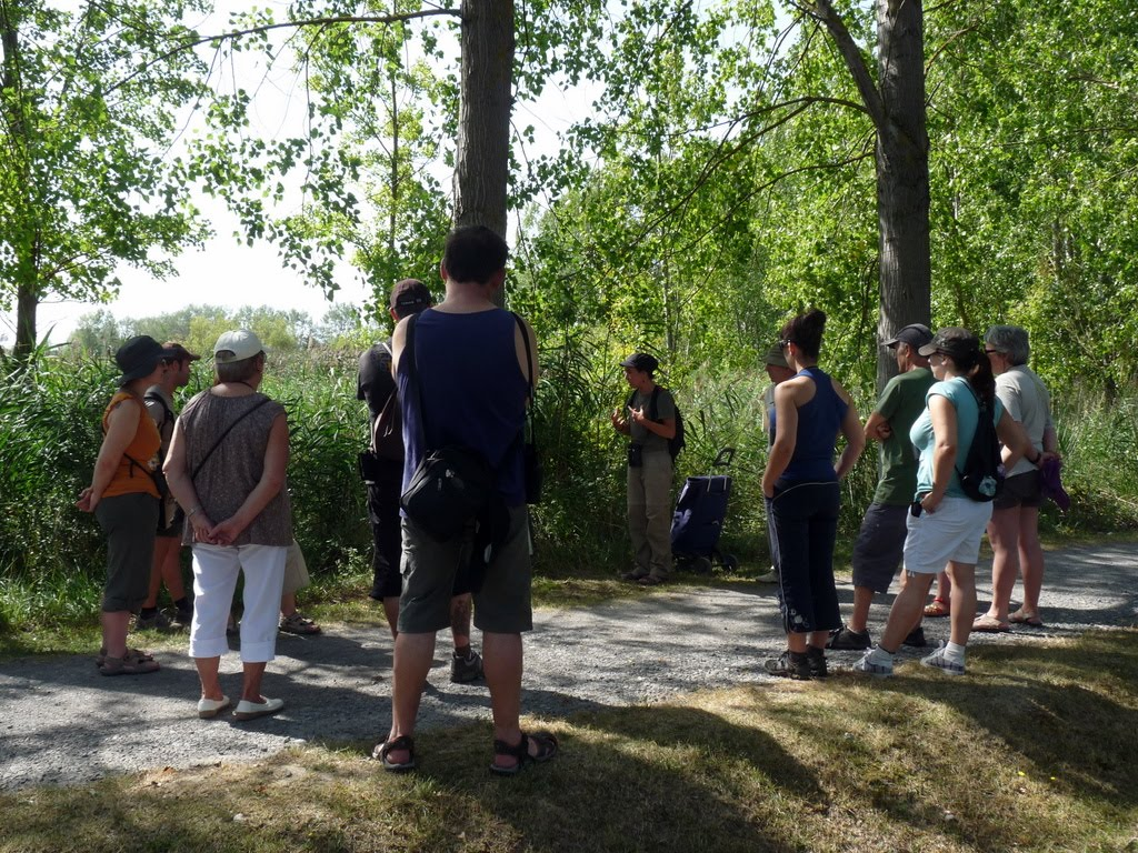 Equinoccio natura visitas guiadas gratuitas por la laguna for Oficina turismo laguardia