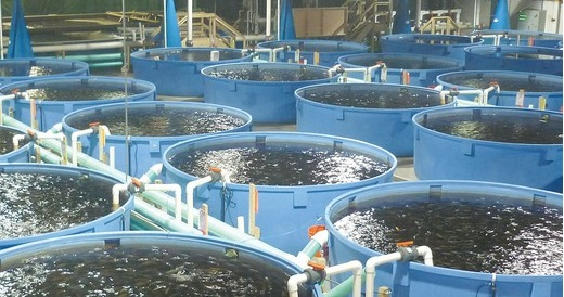 Wild vs farmed fish rock star boot camp for Fish farming pros and cons