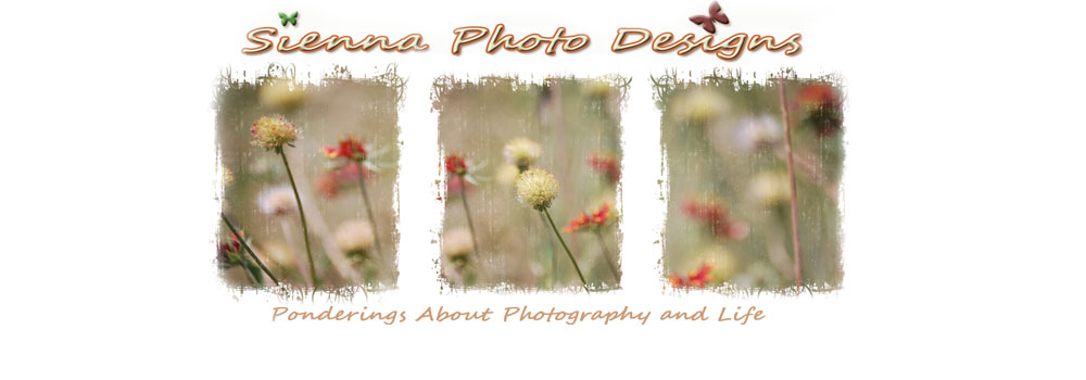 Sienna Photo Designs