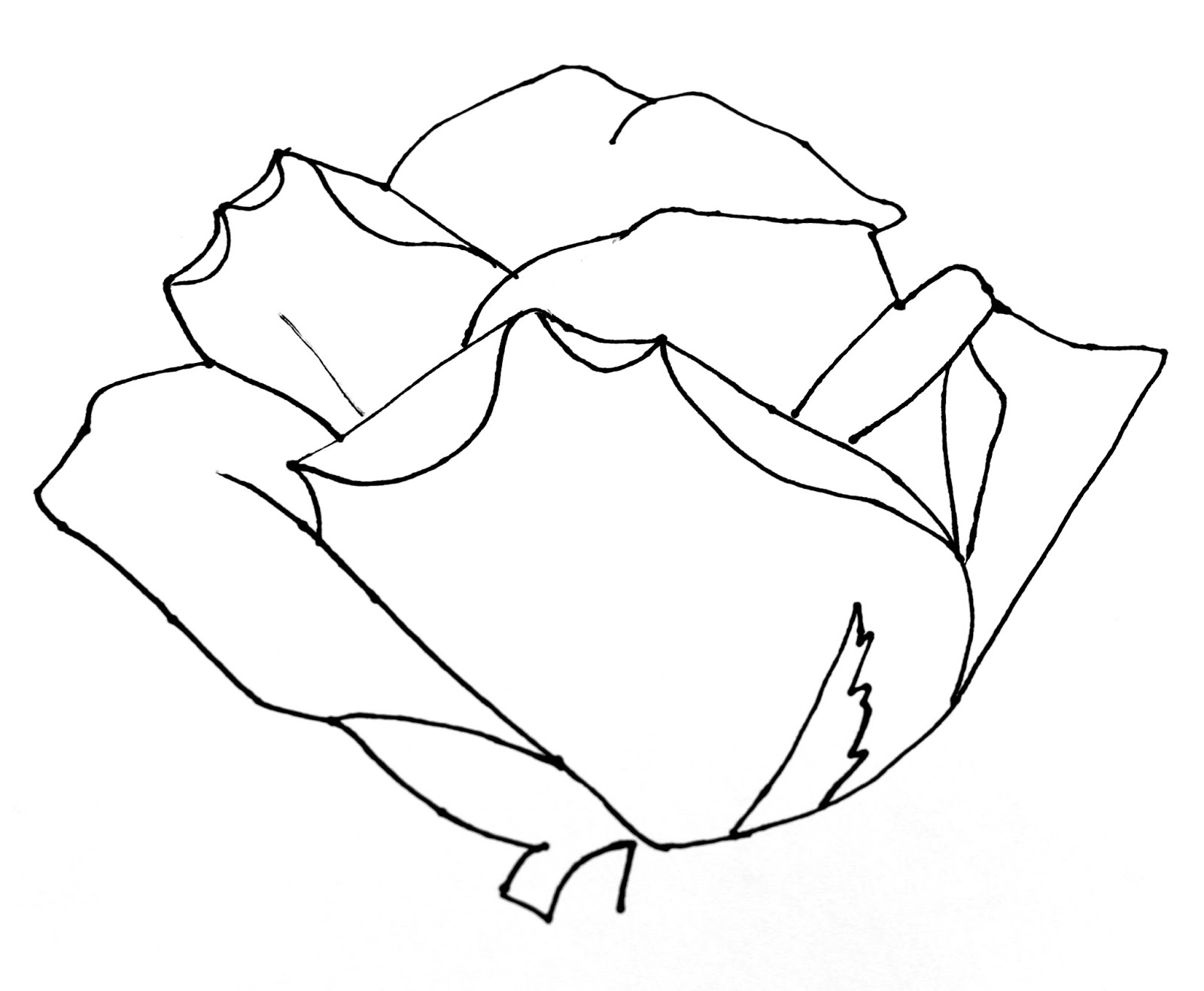 Flower Petals Line Drawing : Smart class still life roses