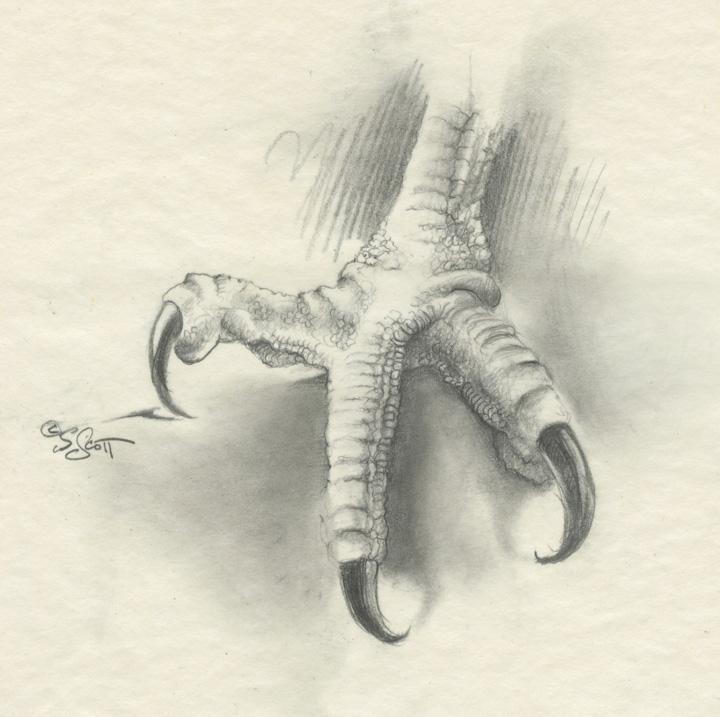 Sandy Scott Art: #430 In the studio: Bird anatomy, con\'t . . .