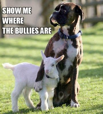 Dog protecting a small sheep.