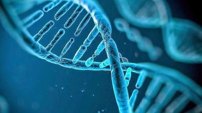 Nuestro Genoma Podría No Ser Del Todo Humano