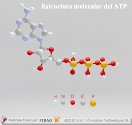 Estructura molecular del ATP