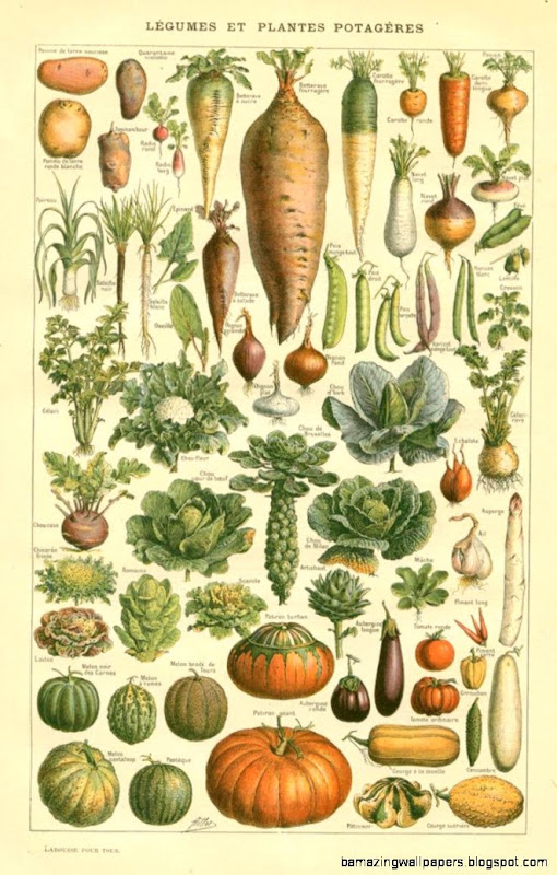 The Sum Of All Crafts image collection   botanical vegetable