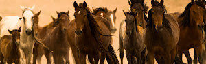 Protect the Symbol of Freedom! Protect the Wild American Mustangs!