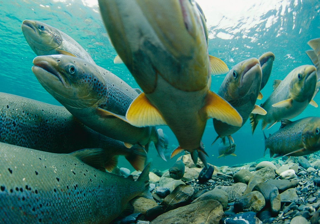 Food with health top 10 best tasting fish quest for Fish s wild