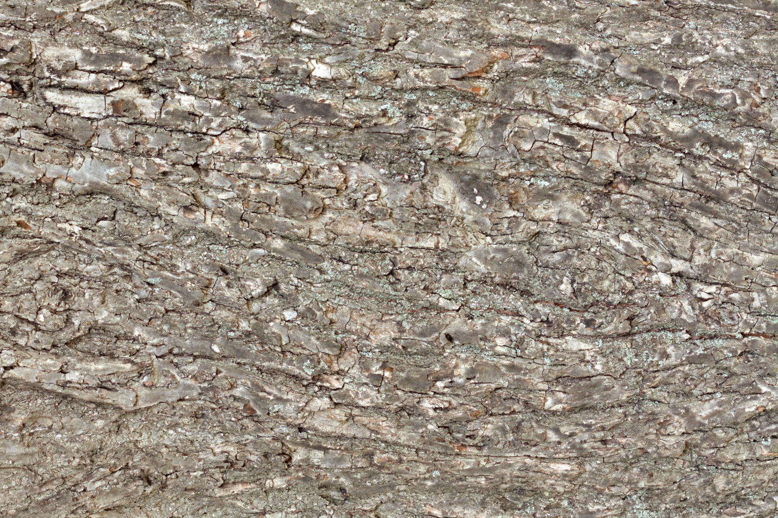 (Wood 23) tree bark plank texture