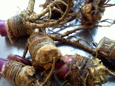 Angelica root benefits
