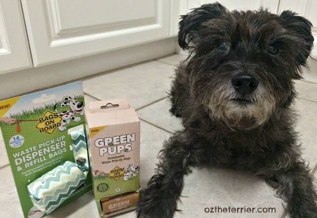 Oz the Terrier with Bags On Board poop bags and dispenser from RPG New Puppy Holiday Bundle