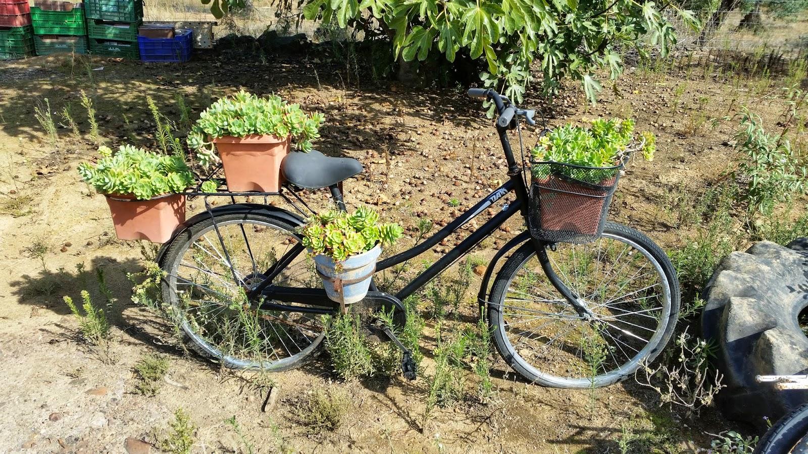 Reto diogenero macetero con una bicicleta manualidades - Bicicleta macetero ...