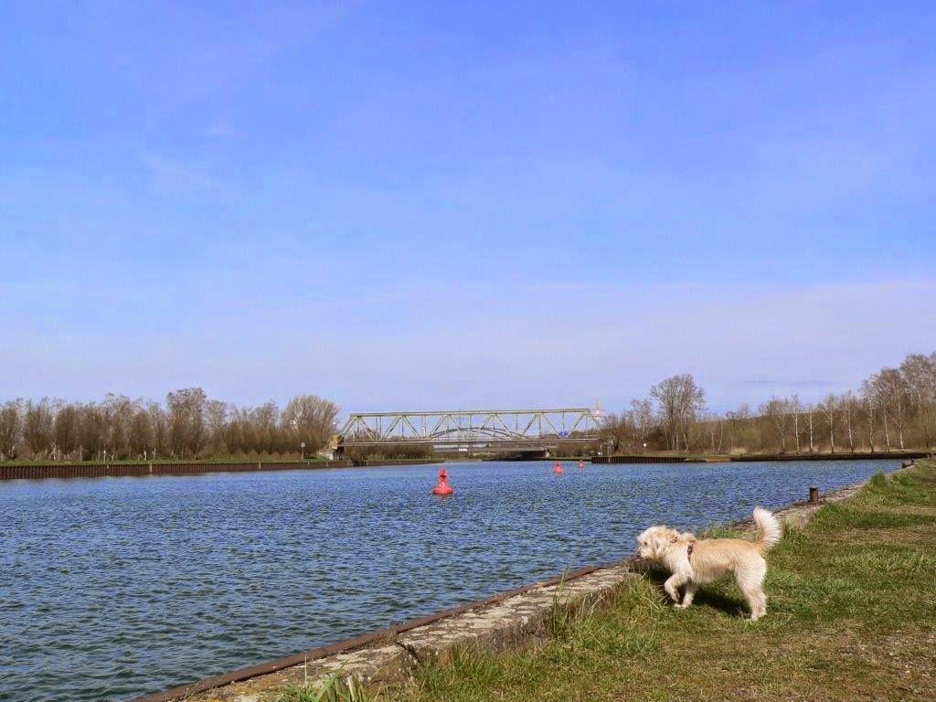 Depression kleine Schritte Kanal Dortmund Frühling Antidepressiva Hund