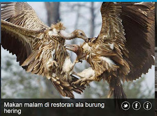 inovLy media : Makan malam di restoran ala burung hearing